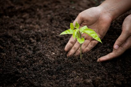 woman-hand-planting-young-tree-on-black-soil-as-save-world-concept